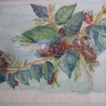 3.4 Branche fleurie - aquarelle et plume feutre - 2009